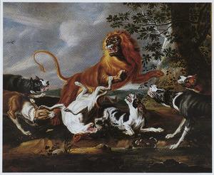 Leeuwenjacht met honden