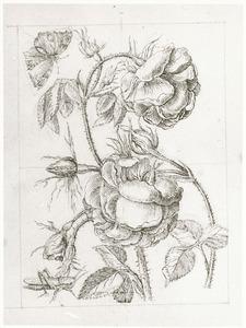 Bataafse roos, grote groen sabelsprinkhaan en dagpauwoog