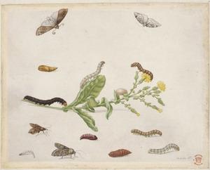 Kompassla met diverse insecten
