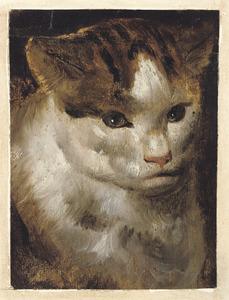 Studie van de kop van een kat
