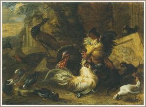 Hoenderhof met vechtende hanen met daarbij een pauw, kalkoen en andere vogels