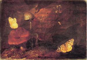 Paddestoelen en vlinders