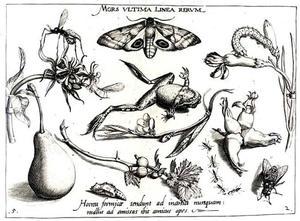 Kikker, bloemen, een peer, mot en andere insecten