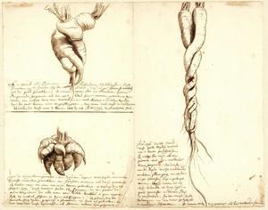 Drie studies van de wortels van een raap