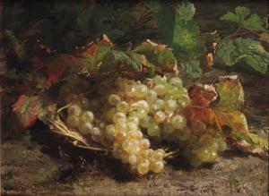 Witte druiven in een rieten mand
