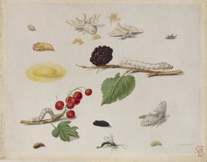 Zwarte moerbei en rode aalbes met metamorfose van de zijderups en de witte tijger