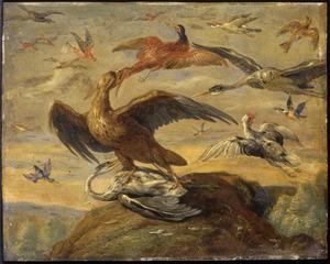 Een roofvogel belaagt andere vogels