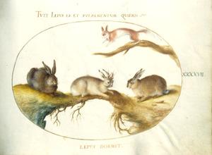 Drie hazen, waarvan een gehoornd (= haas met Shopes papilloma-virus), en een eekhoorn