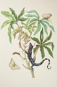Cassave met zwarte tegu, rups, pop en twee witte pauwvlinders