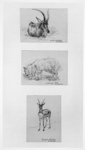 Blad met drie studies van antilopen en een bok
