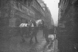 Trekpaard te Parijs