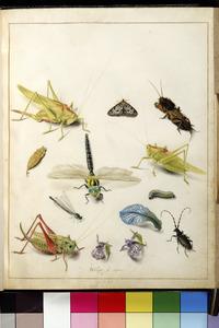 Insecten en bloemblaadjes
