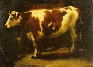 Koe in een stal