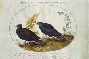 Twee roofvogels, mogelijk arenden