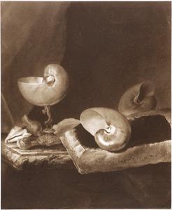 Stilleven met schelpen op een marmeren tafel