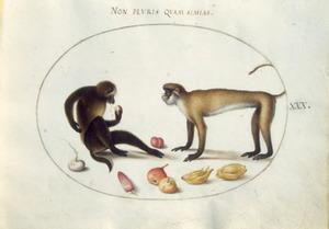 Twee apen, een meiknol, pruim en aubergine