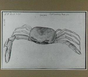 Guajume (Braziliaanse krab)