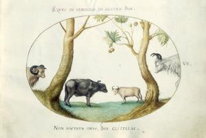 Vier runderen onder een plataan