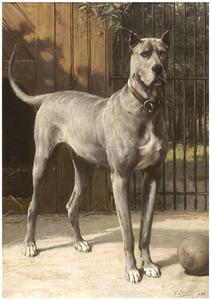Blauwe dog