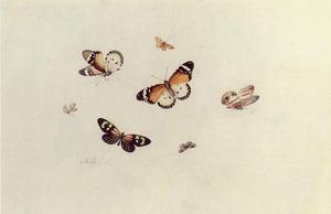Studie van zeven vlinders