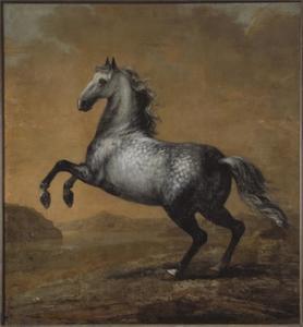 Kleine Engelsman, rijpaard van Karel XI