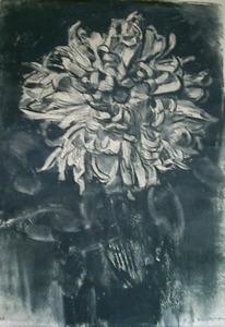 Chrysanthemum blossom viewed frontally