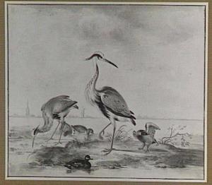 Reigers en eenden aan de oever van een rivier