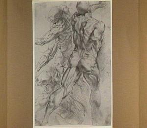 Drie anatomische studies
