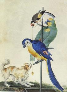 Twee papegaaien op een stang en een goudvink, die een spaniël plaagt