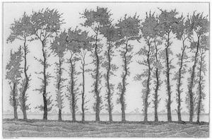 Bomen bij Wapenveld