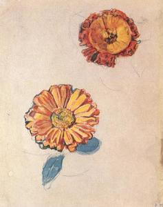Study of two marigolds 1