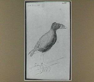 Braziliaanse vogel