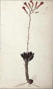 Studie van een plant