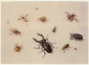 Studie insekten en spinnen waaronder een vliegend hert