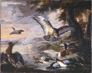 Buizerd bedreigt eenden in een vijver, links een roerdomp
