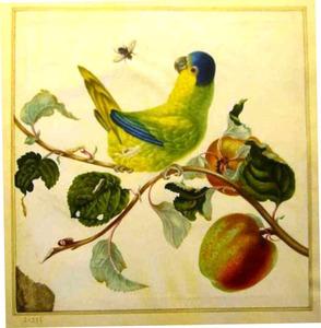 Papegaai op een tak van een appelboom