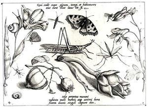 Sprinkhaan en andere insecten, bloemen en twee slakken