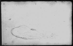 Potvis, gestrand tussen Zandvoort en Wijk aan Zee op 20 februari 1762