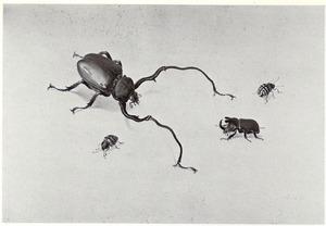 Vier uitheemse insekten