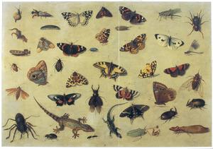 Studie van insekten, enkele hagedissen en een slak