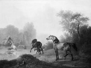 Wilde paarden in een stoeterij