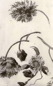 Studie van bloemen