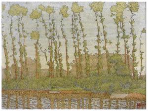 Bomen langs de rivier de IJssel