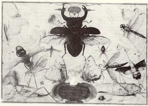 Studie van insecten (Lucht)