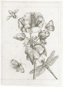 Althaeaboompje met venglazenmaker, hoornaar en onbekend insect