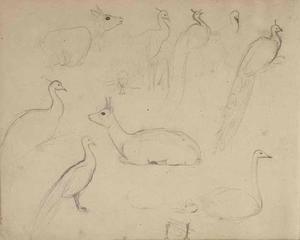 Schetsboekblad met schetsen van een pauw, zwaan en antilope