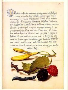 Hyacint, zwarte moerbei en rups