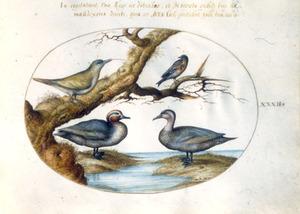 Twee eenden, een specht en een zangvogel