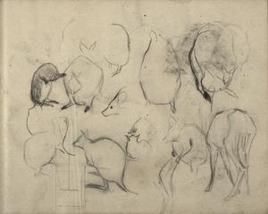 Schetsboekblad met schetsen van kangoeroe's en een hert