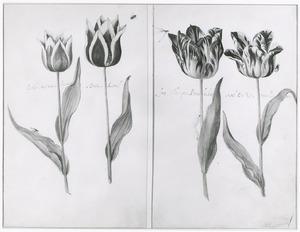 Vier tulpen (Pürper en Vyt van Reikart, Dúck Cornel, frug geflampten Pottenbacker en Gel en Rot van Leyden) met insecten